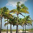 17 Palm Trees