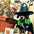 Oct 31 - Halloween 3