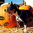 Oct 31 - Halloween 6