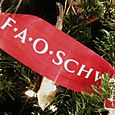 25 FAO Schwartz