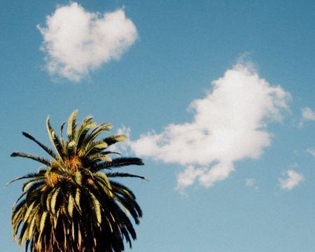 Weho Palm Tree