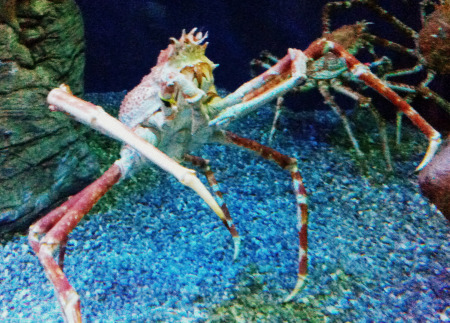 Copy of Giant Crab