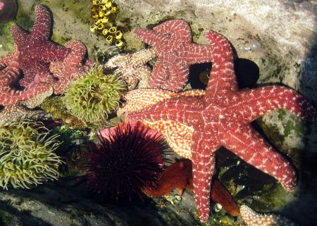 Copy of Starfish