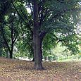 19 Central Park