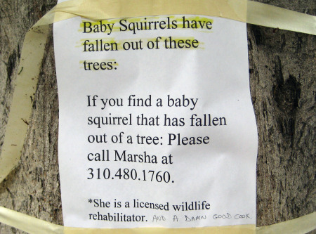 Copy of Squirrels