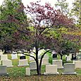 54 Arlington Cemetery 4
