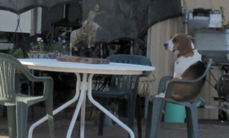 Dog in Brenda