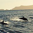 11 Dolphin