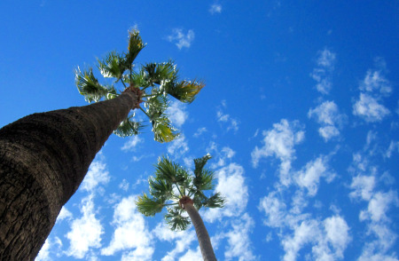 Copy of Palm Trees With Clouds 1