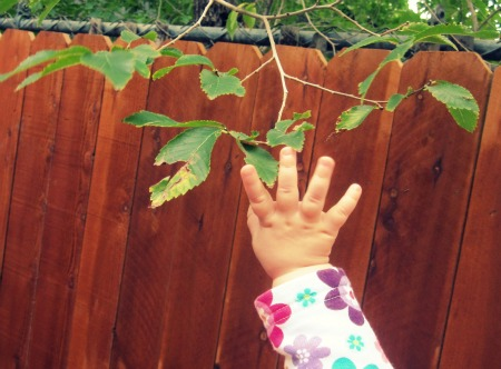 Copy of Camryn Reaches for Leaves
