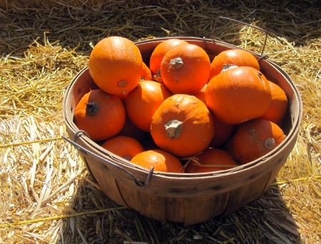 Copy of Basket o Pumpkins