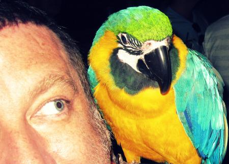 Copy of Chux Parrot