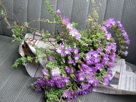 Purple Plant 2