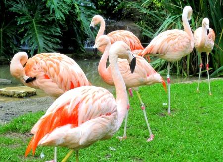 03 Flamingo's