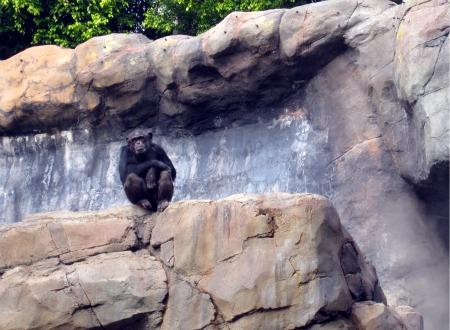 07 Chimp