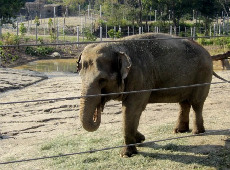 09 Elephant of Cambodia