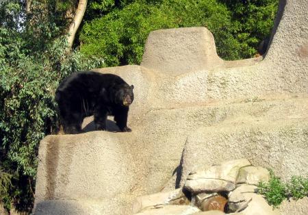 10 Black Bear