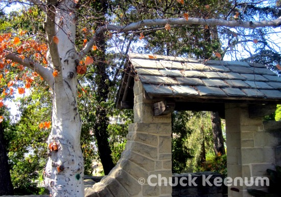 4 Greystone Mansion Tree and Walkway