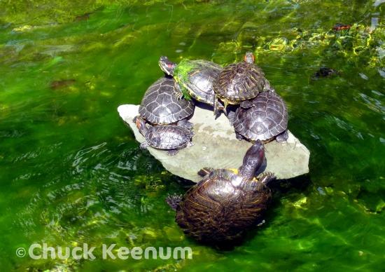 5 Greystone Mansion Turtle Pond