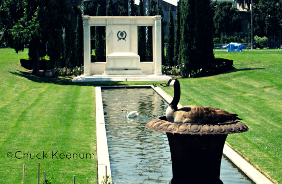 Swan Nests at Hollywood Forever - Lens Angeles