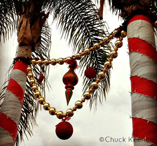 Palm Tree for Xmas - Lens Angeles