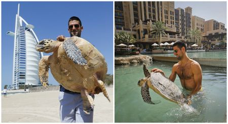 Novak Djokovic Dubai 2013 Turtles Collage
