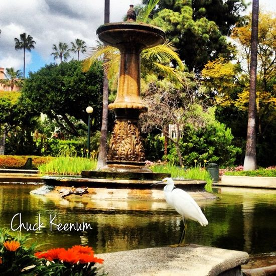 Egret at Will Rogers Park - Lens Angeles