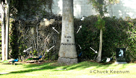 Hollywood Forever - Cats & Peacocks - Lens Angeles