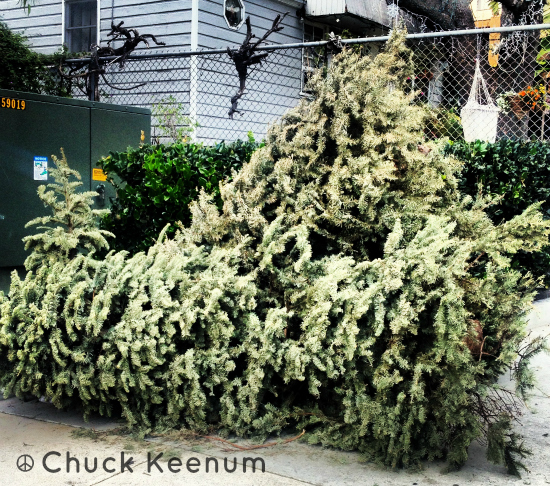 Xmas Trees on the Curb - Lens Angeles