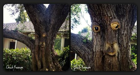 Tree Face in Bev Hills - Lens Angeles