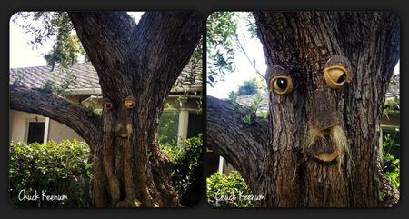 Tree Face in Bev Hills - Lens Angeles