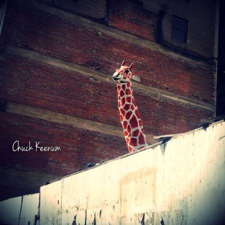 Giraffe in Pershing Square - Lens Angeles