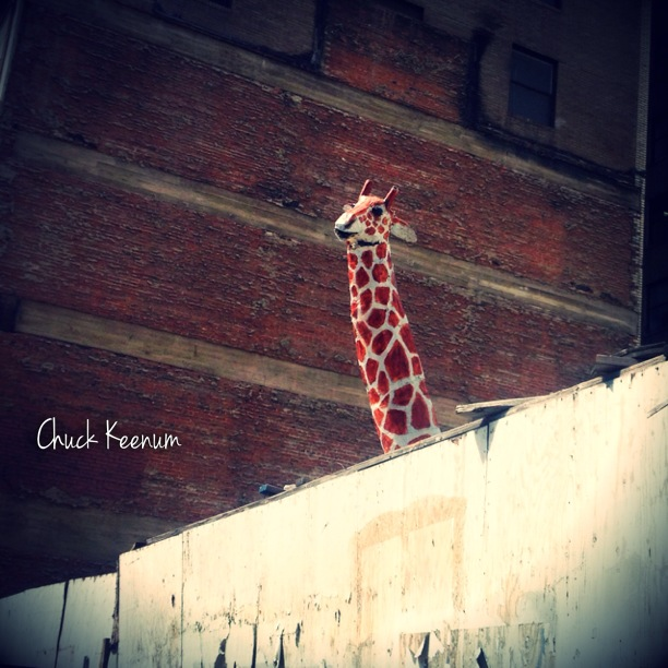 Giraffe in Pershing Square - Lens Angeles
