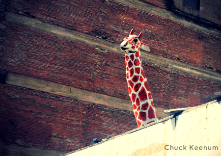 Giraffe in Pershing Square - 1