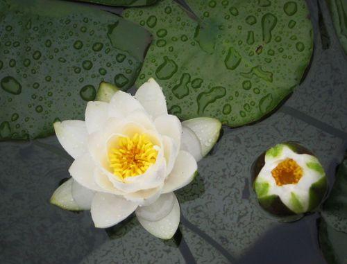 07 A Pond