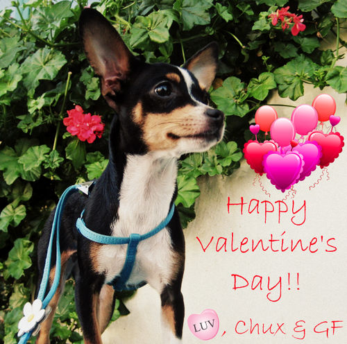 Feb 14 - Valentine's Day