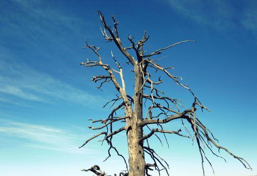 07 Tree and Sky