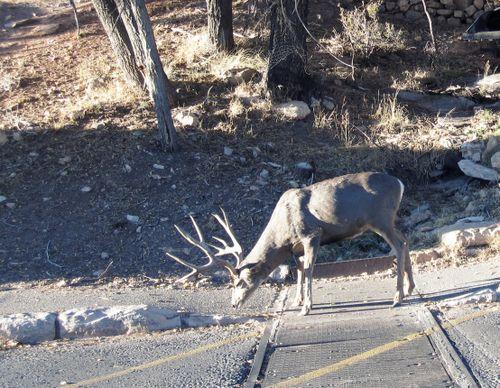 08 A Buck