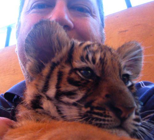 06 Chux Tigers 2