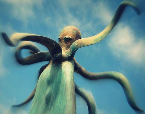 11 Octopus