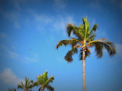 18 Palm Trees