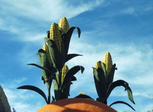 10 Corn