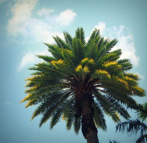 05 Palm Tree