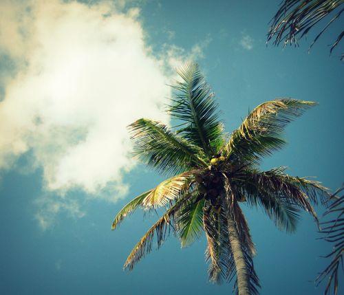 28 Palm Tree and Cloud